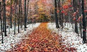 Приметы, обычаи и обряды на 8 ноября – Дмитриев день