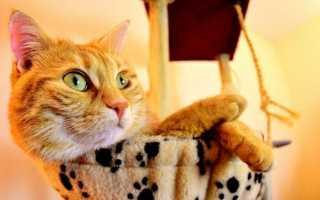 Приметы и поверья о рыжем коте в доме
