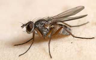 Приметы и поверья о мухах