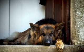 К чему собака приходит к дому – примета
