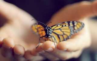 Приметы и поверья про бабочек
