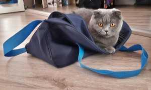 Народные приметы о серой кошке