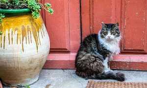 К чему чужая кошка приходит в дом