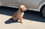 Примета: к чему сбить собаку на машине
