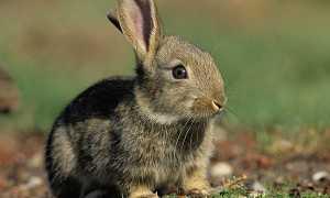 Приметы про зайца