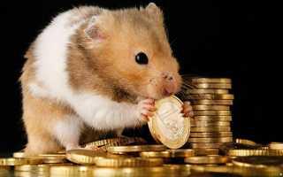 Приметы про мышей