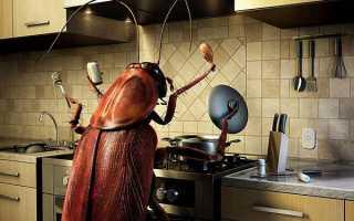 Приметы про тараканов в доме