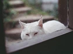 Белая кошка сидит у окна