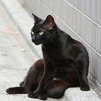 Черный кот сидит на дороге