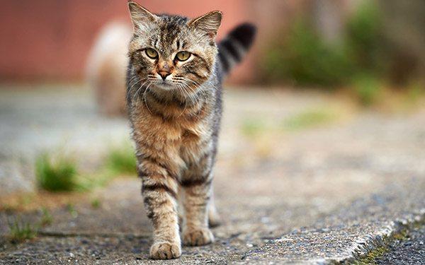 Кошка идет по дороге