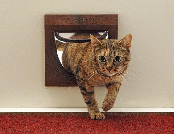 Кошка возвращается домой