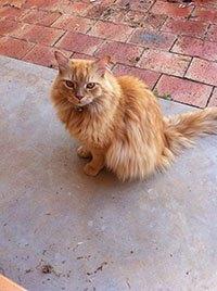 Рыжий кот сидит на дороге