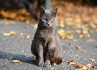Серый кот сидит на дороге