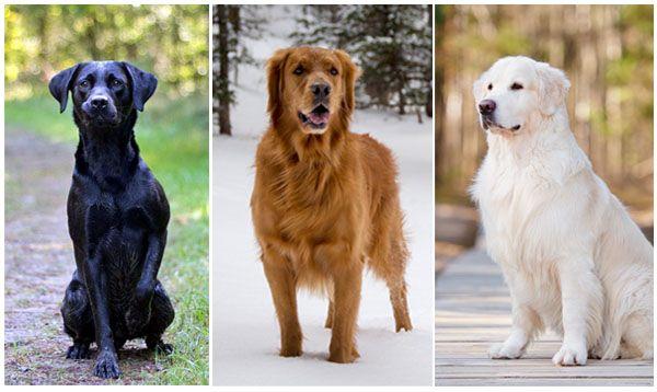 Черный, рыжий и белый псы