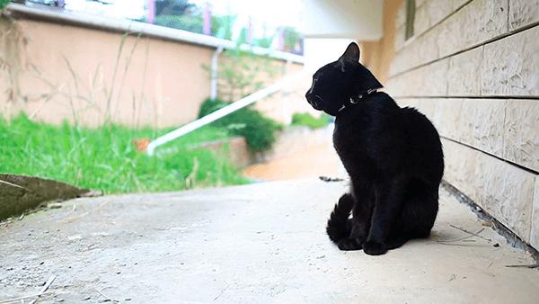 Черный кот у дома