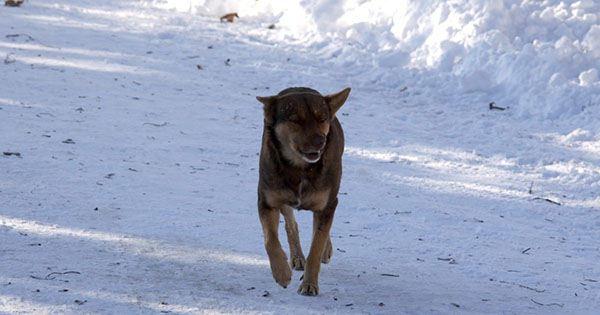 Пес бежит по дороге