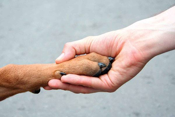 Лапа собаки в руке человека