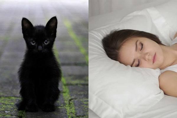 Снится черный кот