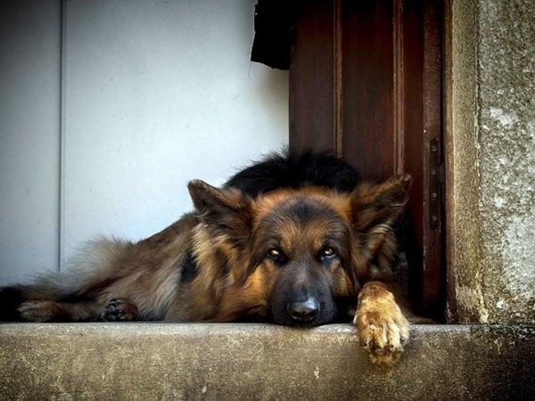 Собака лежит на пороге