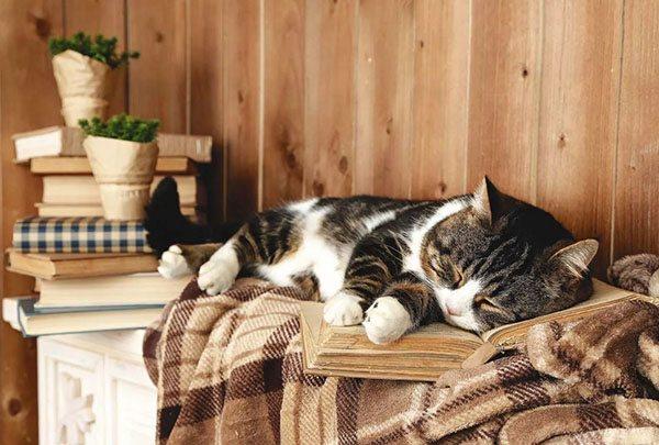 Кошка спит на лавочке