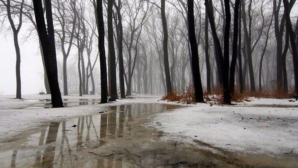 Туманный парк поздней осенью