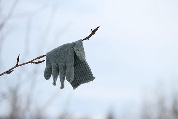 Перчатка на ветке