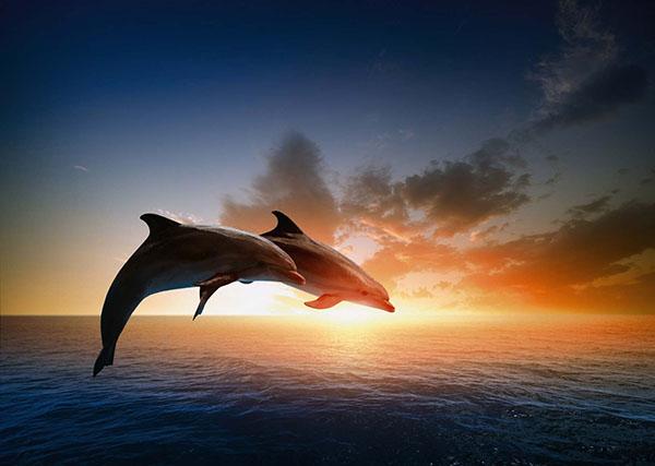 Дельфин выпрыгивает из воды