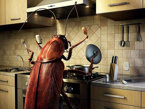 Таракан хозяйничает на кухне