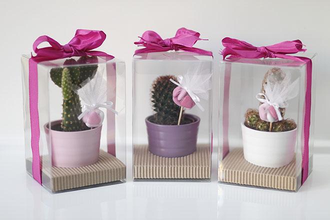 Подарочные кактусы