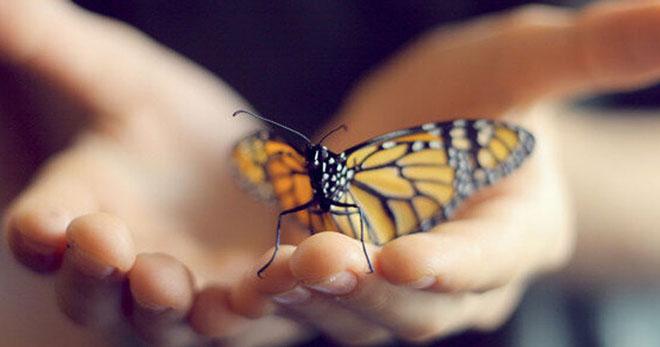 Бабочка на ладошке